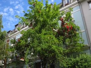 Rote Rose in grünem Baum